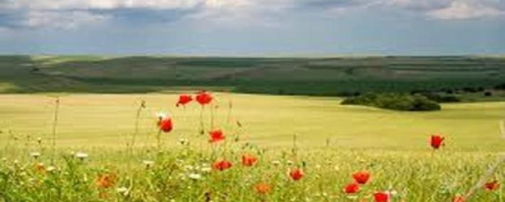 Намаляха сделките с ниви в Ивановско